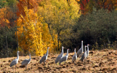 Birders flock to these 7 NW Michigan locales