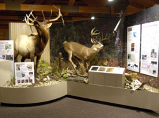 Carl T. Johnson Hunting and Fishing – MDNR