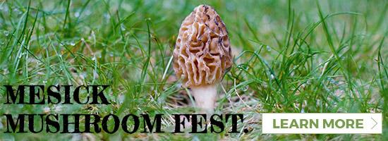 mesick mushroom festival link