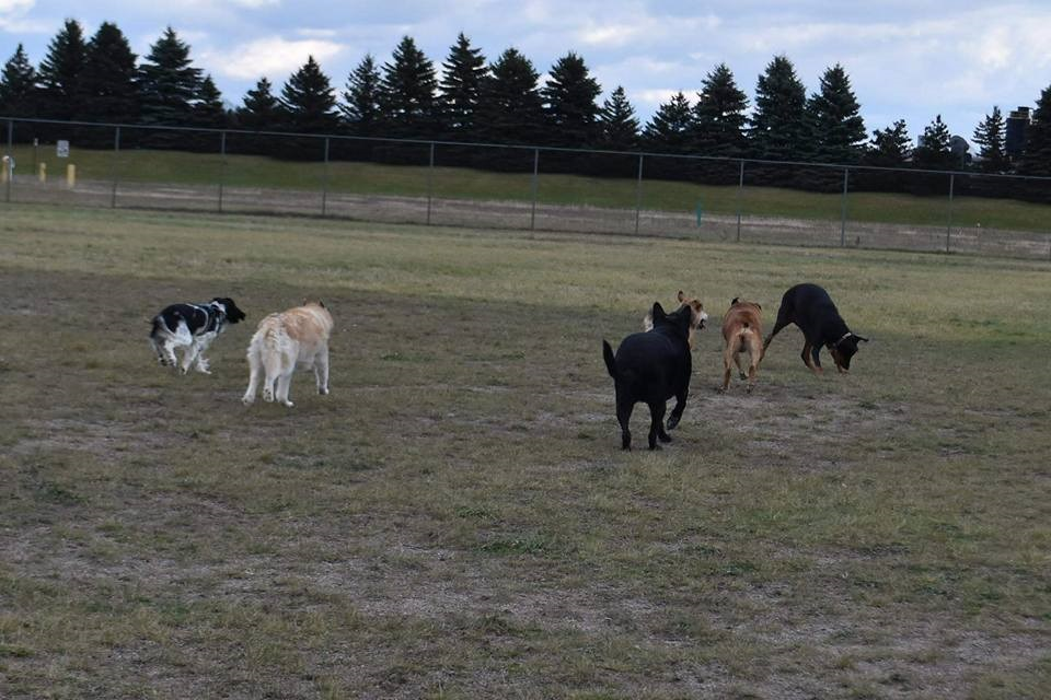 Cadillac Area Dog Park