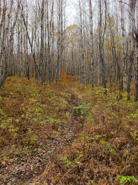 Evart Motorcycle Trail