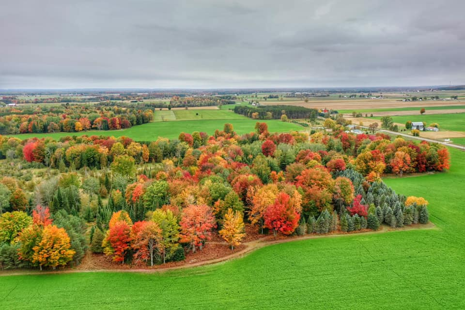 Fall Color Update – October 7, 2020