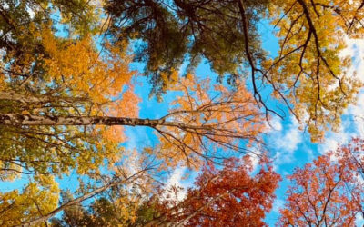 Fall Color Update – We are at PEAK! October 14, 2020