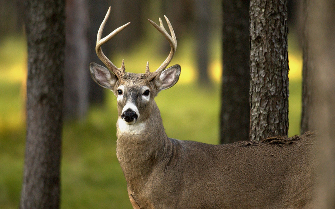 Michigan DNR – Whitetail Food Plot and Habitat Management Clinic