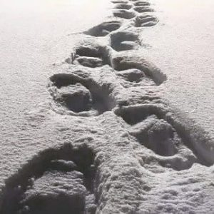 Snowshoe footprints